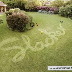 Slacker Lawn
